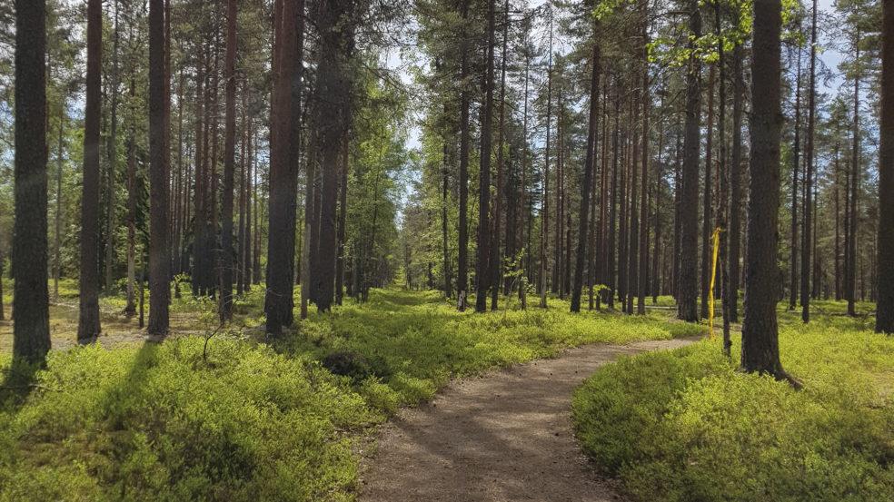 Lauhanvuoren polku kesällä