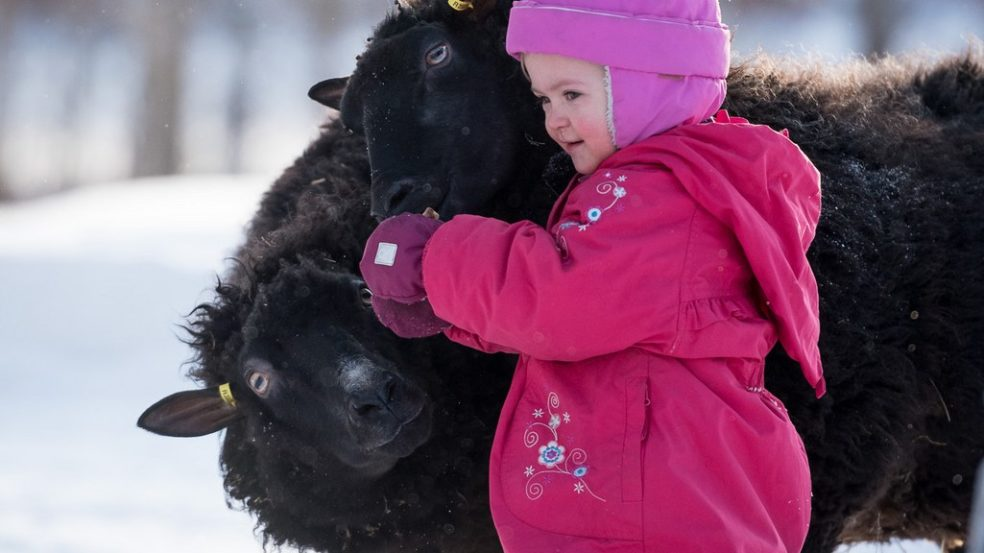maatilamatkailu ilomäki lapsi ja lammas perheloma