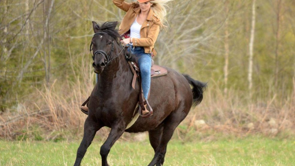 lukkarilan hevospalvelut hevosratsastaja pellolla
