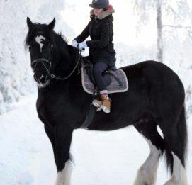 lukkarilan hevospalvelut hevosratsastaja talvisissa maisemissa