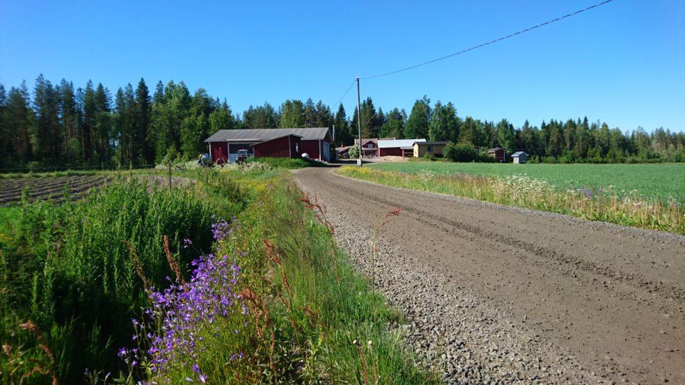 maatilamatkailu ilomäki kesäinen pelto ja päärakennus