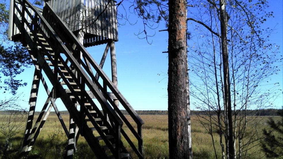 Suksenjärven lintutorni