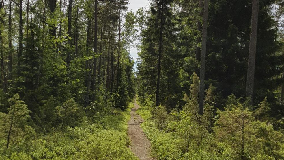 Lauhanvuori kapea polku metsässä