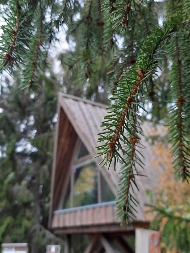 Villa Ursus kuusten ja karhujen keskellä.