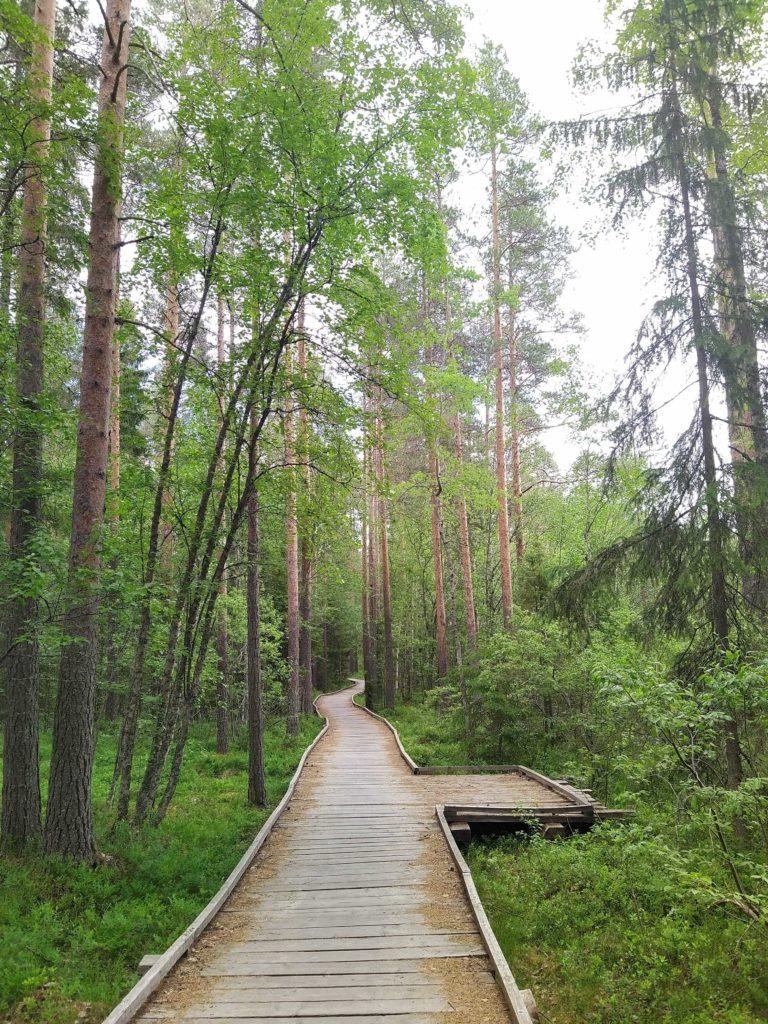 pitkospuut Kyrkösjärvi