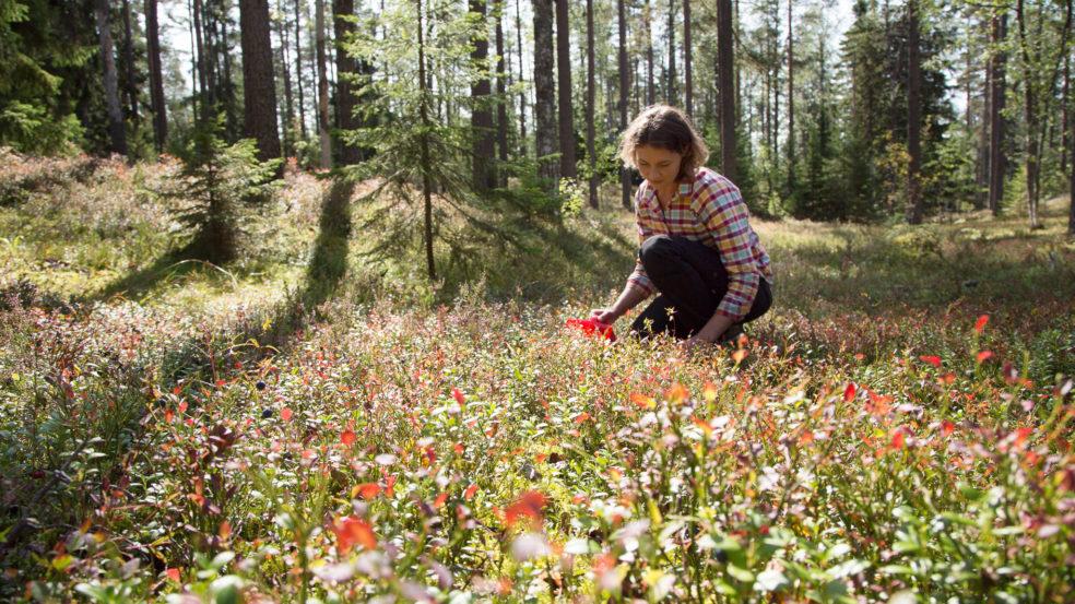 Lauhanvuori - Hämeenkangas UNESCO Global Geopark visit lakeus luonto tarjoaa elämyksiä